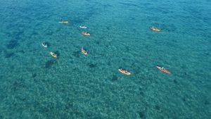 Kayak Turtle Tour